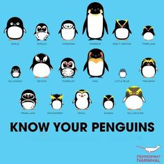 7f5d9eccba5b75bb995ff9684a5a1ed1--penguin-awareness-day-penguin-day